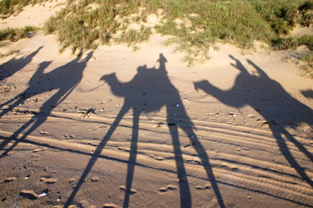 camel_shadows